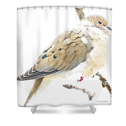 Mourning Dove, Snowy Morning Shower Curtain