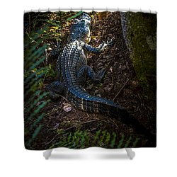 Mr Alley Gator Shower Curtain by Marvin Spates