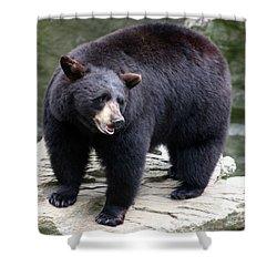 Mr Bear Shower Curtain by Karol Livote