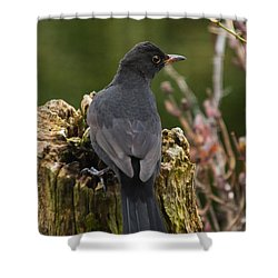 Mr Birdy Shower Curtain