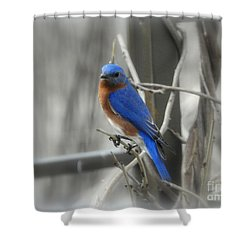 Shower Curtain featuring the photograph Mr. Bluebird by Brenda Bostic