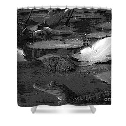 Mr. Caiman Shower Curtain