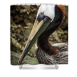 Mr. Cool Wildlife Art By Kaylyn Franks Shower Curtain