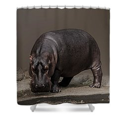 Mr. Hippo Shower Curtain by Charuhas Images