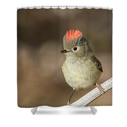 Shower Curtain featuring the photograph Mr Kinglet  by Mircea Costina Photography