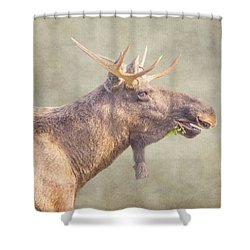 Mr Moose Shower Curtain by Roy McPeak