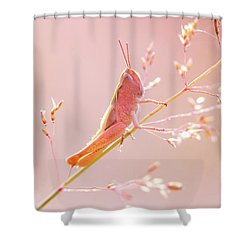 Mr Pink - Pink Grassshopper Shower Curtain by Roeselien Raimond