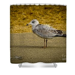 Shower Curtain featuring the photograph Mr. Seagull by Melissa Messick