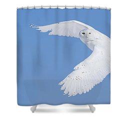 Mr Snowy Owl Shower Curtain by Mircea Costina Photography