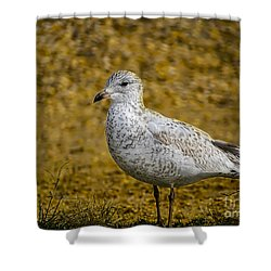 Shower Curtain featuring the photograph Mrs. Seagull by Melissa Messick