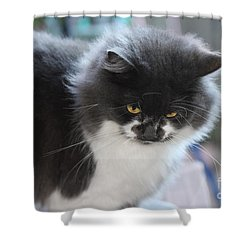 Ms Mustache 3 Shower Curtain