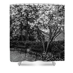 Msu Bench 2 Shower Curtain by John McGraw