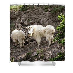 Mt Goat Outing Shower Curtain