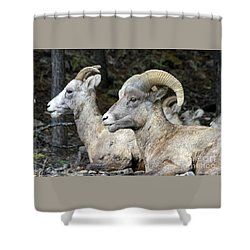 Mt Sheep  Shower Curtain