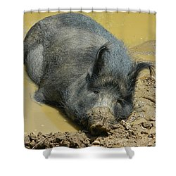Mud Spa Shower Curtain by Emmy Marie Vickers
