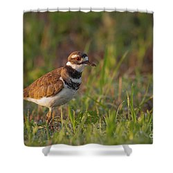 Muddy Killdeer Shower Curtain