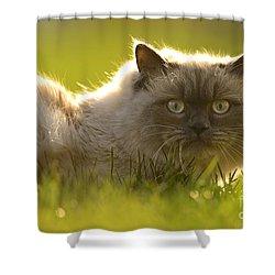 Mufasa Shower Curtain