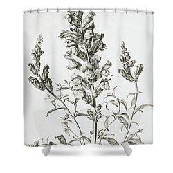 Mufle De Veau Shower Curtain by Gerard van Spaendonck