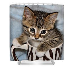 Mug Kitten Shower Curtain by Teresa Zieba