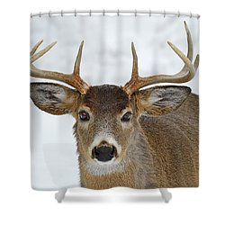 Shower Curtain featuring the photograph Mug Shot by Tony Beck