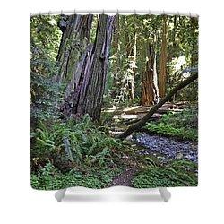Muir Woods Beauty Shower Curtain