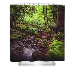 Shower Curtain featuring the photograph Muir Woods No. 3 by Laura DAddona