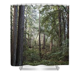 Shower Curtain featuring the photograph Muir Woods Tranquility by Sandra Bronstein