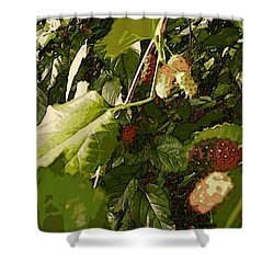 Mulberry Moment Shower Curtain