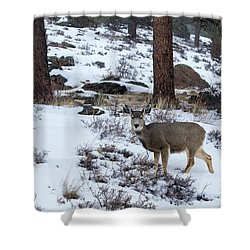 Mule Deer - 8922 Shower Curtain