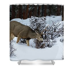 Mule Deer - 9130 Shower Curtain