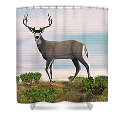 Mule Deer Buck Shower Curtain by Walter Colvin