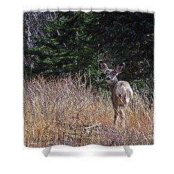 Mule Deer In Utah Shower Curtain