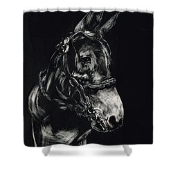 Shower Curtain featuring the drawing Mule Polly In Black And White by Andrew Gillette