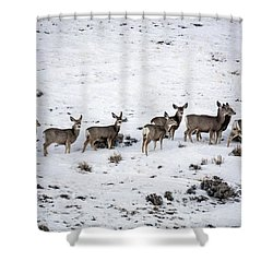 Muledeer Gather On A Snowy Hillside In Sweetwater County In Wyoming Shower Curtain