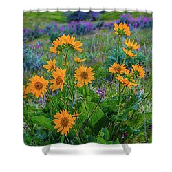 Mule's Ear And Lupine Shower Curtain