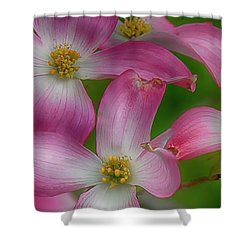 Mulligan Shower Curtain by Skip Tribby