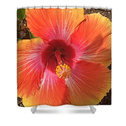 Multi-colored Beauty Shower Curtain