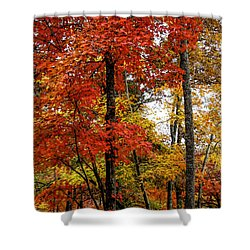 Multi-colored Leaves Shower Curtain