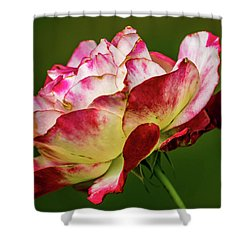 Multi-colored Rose Shower Curtain