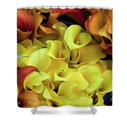 Multicolored Calla Lillies Shower Curtain