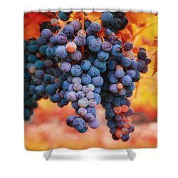 Multicolored Grapes Shower Curtain by Lynn Hopwood