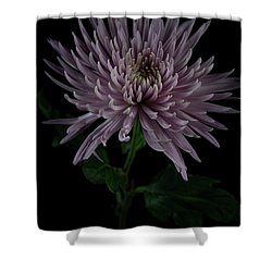 Shower Curtain featuring the photograph Mum, No.3 by Eric Christopher Jackson