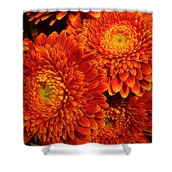 Mums In Flames Shower Curtain