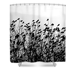 Murder Shower Curtain