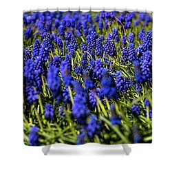 Muscari Shower Curtain