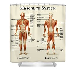 Muscular System Shower Curtain by Gina Dsgn
