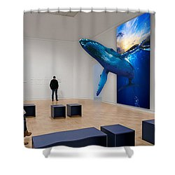 Museum Whale Watching Shower Curtain