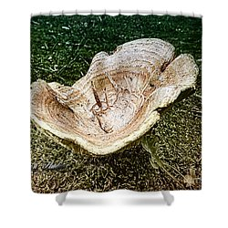 Mushroom  1 Shower Curtain by Melissa Messick