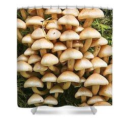 Mushroom Condo Shower Curtain