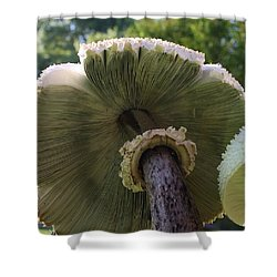 Mushroom Down Under  Shower Curtain by Bruce Bley